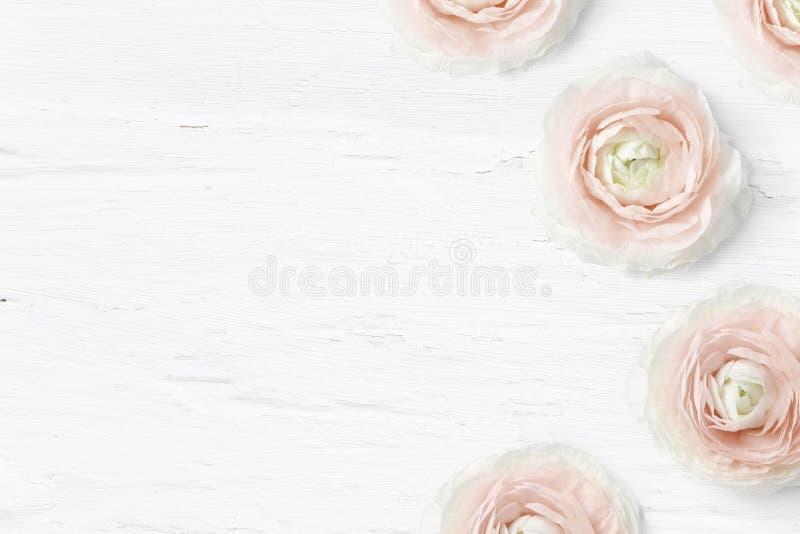 Utformat materielfoto Den kvinnliga skrivbords- modellen med smörblommablommor, Ranunculus, tömmer utrymme och sjaskig vit bakgru royaltyfria bilder