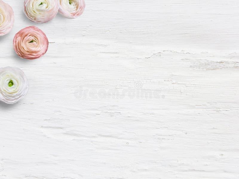 Utformat materielfoto Den kvinnliga skrivbords- modellen med smörblommablommor, Ranunculus, tömmer utrymme och sjaskig vit bakgru arkivbild