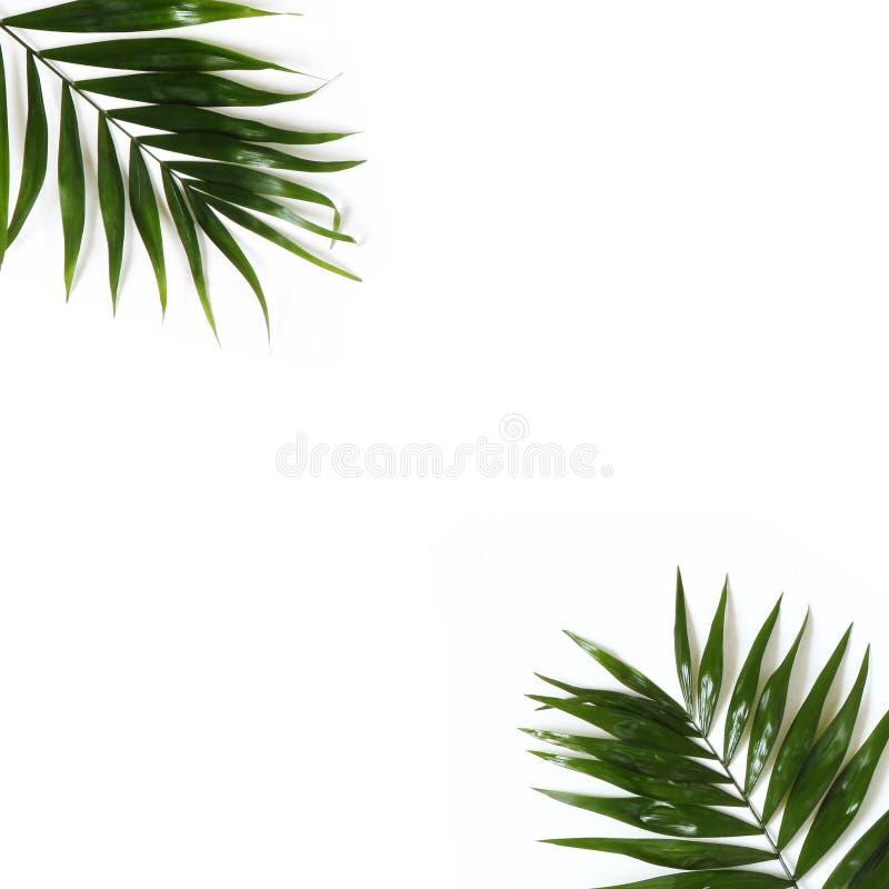 Utformat materielfoto Djungelsammansättning av gröna palmblad som isoleras på vit bakgrund Tropisk sommarferie arkivbild