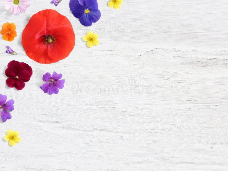 Utformat materielfoto Kvinnlig skrivbords- blom- sammansättning med den lösa och ätliga trädgårds- blomman Vallmo pensépelargon o royaltyfri bild