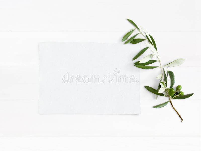 Utformat materielfoto Skrivbords- modell för kvinnligt bröllop med den gröna olivgröna filialen och det vita tomma pappers- korte arkivbild