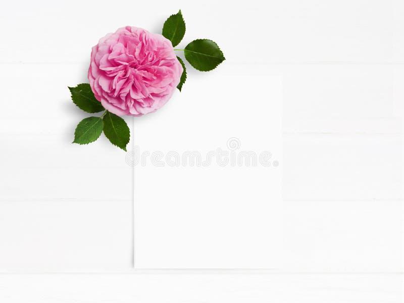 Utformat materielfoto Skrivbords- modell för kvinnligt bröllop med den rosa engelskarosblomman och det vita tomma pappers- kortet arkivbilder