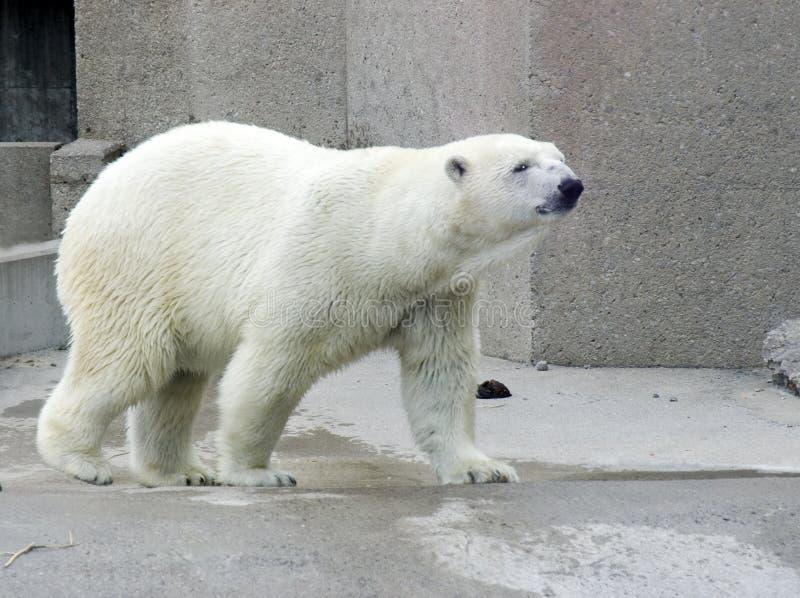 uthärda polart