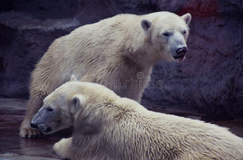 uthärdar polart arkivbild