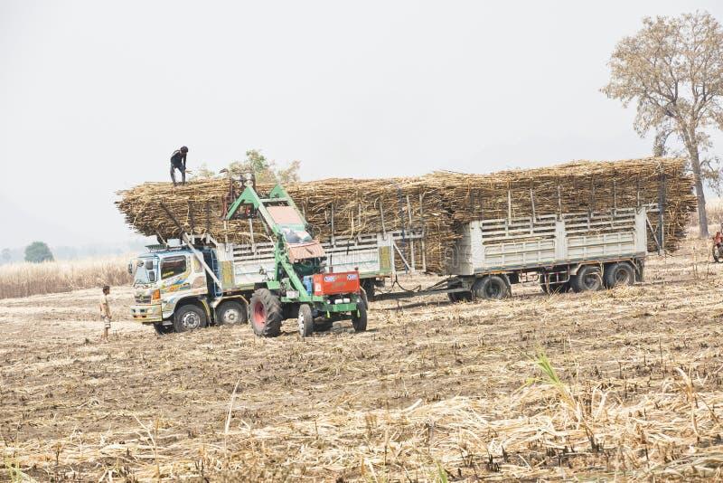 UTHAITHANI,泰国行军20日2014年-泰国的农田劳工 免版税库存图片