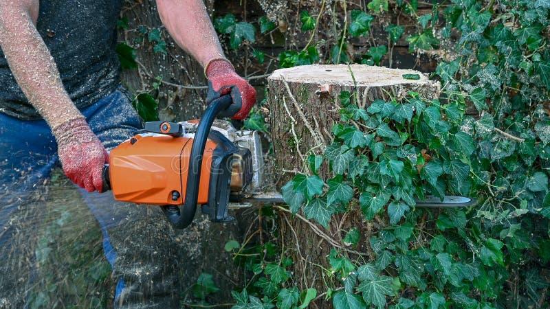 Utilisation d'une tronçonneuse sur une tige d'arbre images libres de droits