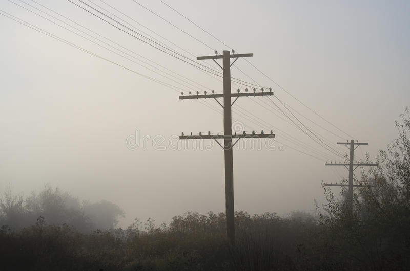 Utility Poles Standing in the Stillness of Early Morning Fog stock photo