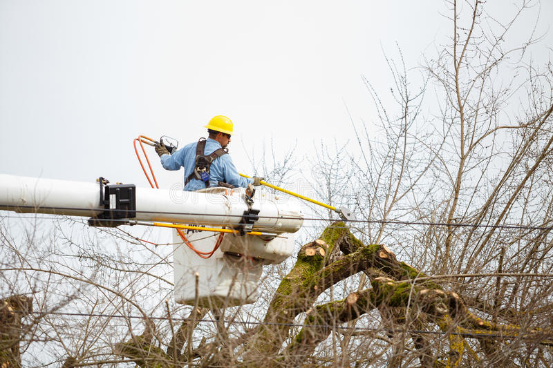 Utility Worker Tree Trimming royalty free stock photos