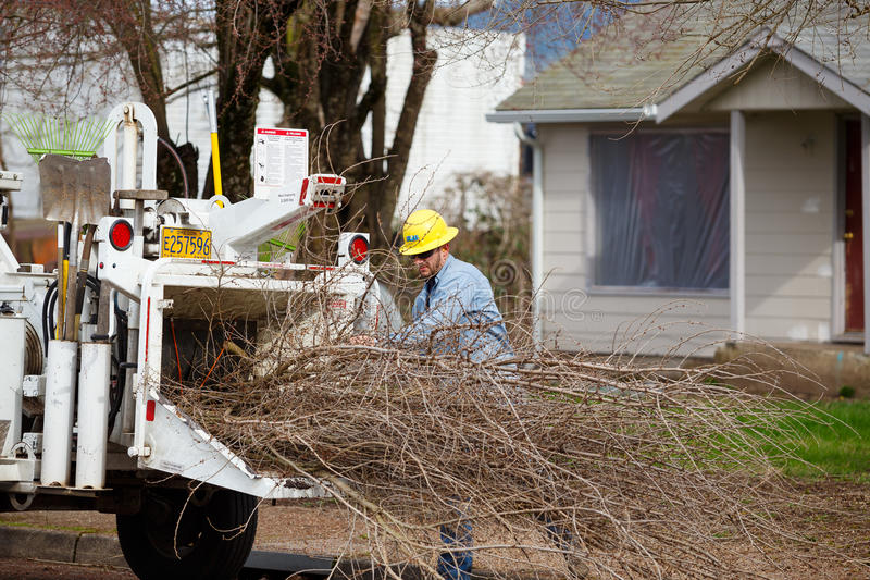 Utility Worker Tree Trimming royalty free stock images