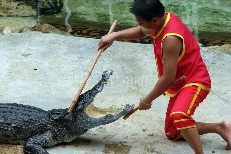 Utkant av den Bangkok staden thailand Farlig show med asiatiska krokodiler royaltyfri fotografi
