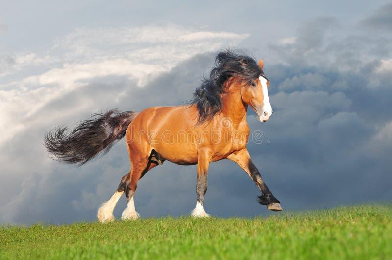 utkastet frigör hästen