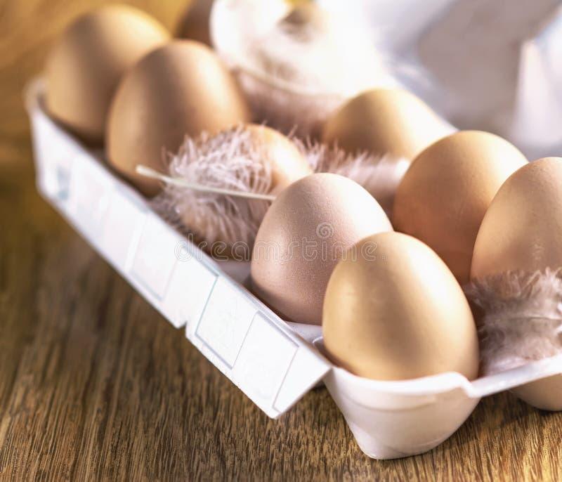 Utläggning av nya ägg, easter, ägg i äggask på trätabellen royaltyfri fotografi