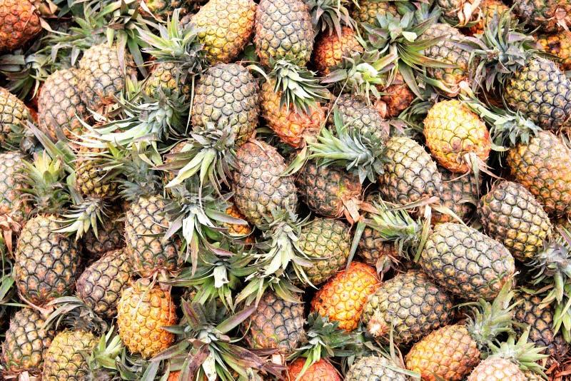 utomhus- ananas för ny marknad royaltyfri bild