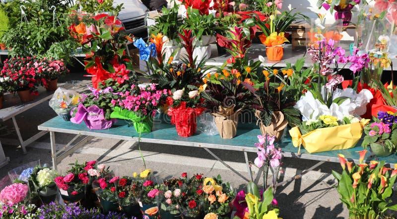 utomhus- blommamarknad arkivbilder