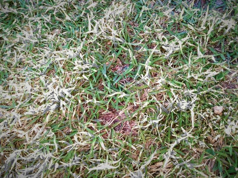 Utomhus- grönt gräs ser så härligt i solig dag arkivfoton