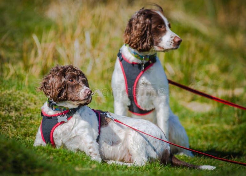 Utomhus- lycklig hundstående fotografering för bildbyråer