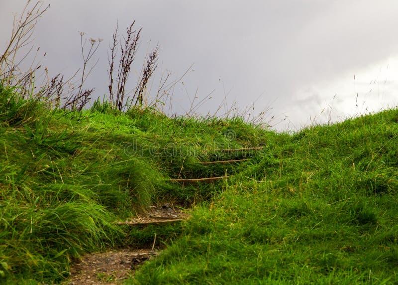 Utomhus moment upp den gräs- backen fotografering för bildbyråer