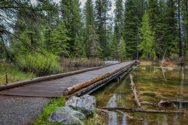 Utomhus- sikt av träbanan över ett stangnerande vatten i en dimmig skog, lokaliserade storslagna Tetons nästan Jenny Lake arkivbilder
