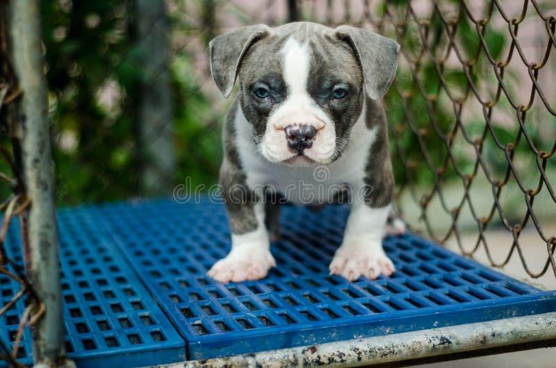 Utomhus- skott för gullig hund royaltyfri bild