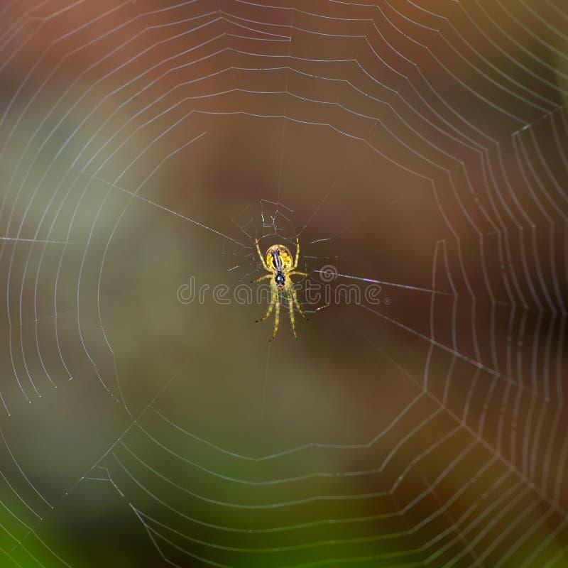 Utomhus- spindel arkivbild