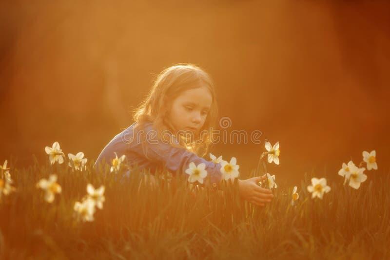 Utomhus- st?ende f?r liten flicka n?ra pingstliljablommor p? solnedg?ngen royaltyfri fotografi