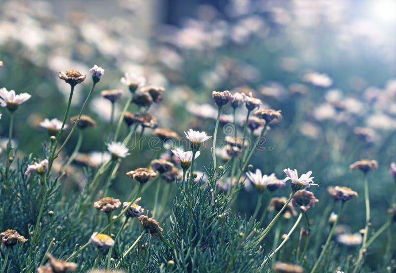 Utomhus- trädgård för vår och för naturliga blommor royaltyfri bild