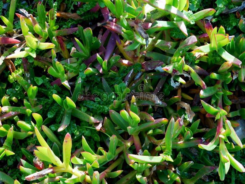 utomhus- växter arkivbilder