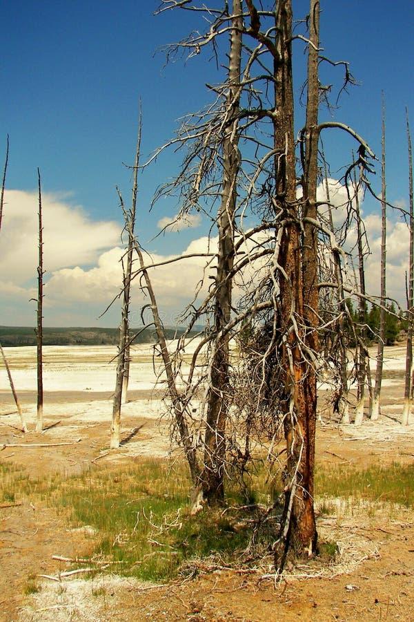 utopiony drzewo zdjęcie stock