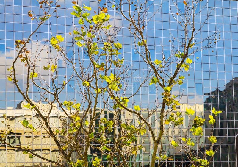 UTRECHT, holandie - PAŹDZIERNIK 20 2018: Widok na szklanej fasadzie drapacz chmur z drzewami zdjęcia royalty free