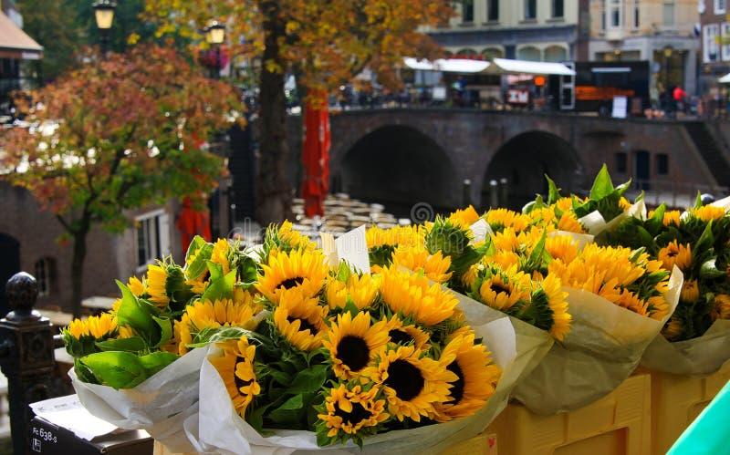 UTRECHT SOM ÄR NEDERLÄNDSK - OKTOBER 20 2018: Sikt på buketter av gula solrosor nära vattenkanalen på blommamarknad arkivbild