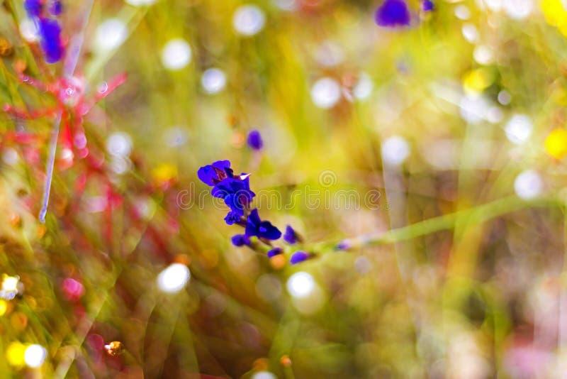 Utricularia do campo com luz solar fotos de stock