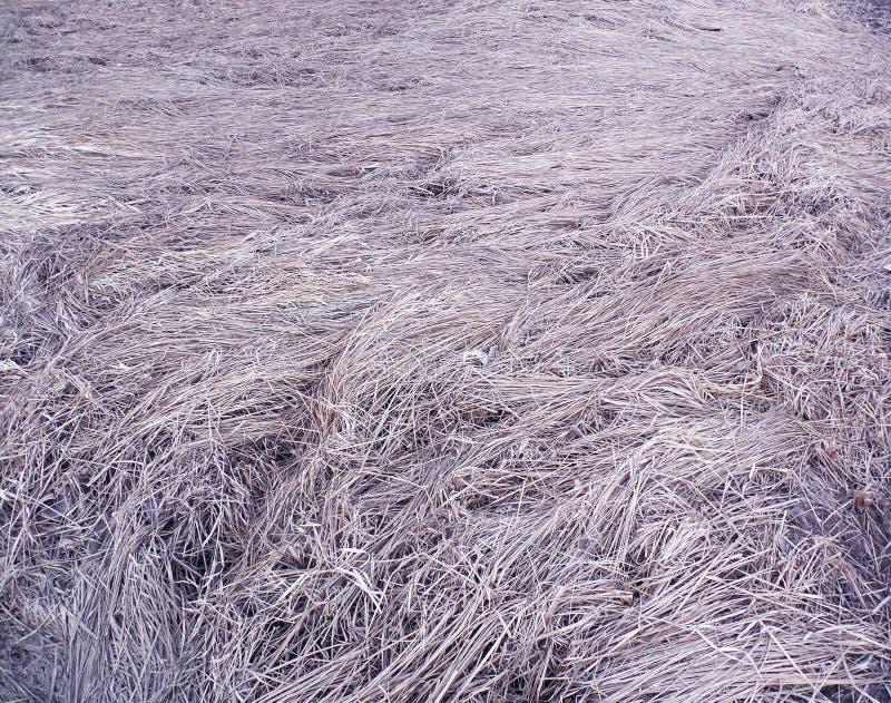 Utrymme av torrt gräs med lila signal fotografering för bildbyråer