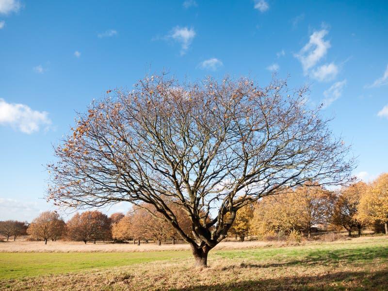 Utrymme för sikt för tomt kalt landskap för höstträdfilialer öppet arkivbilder