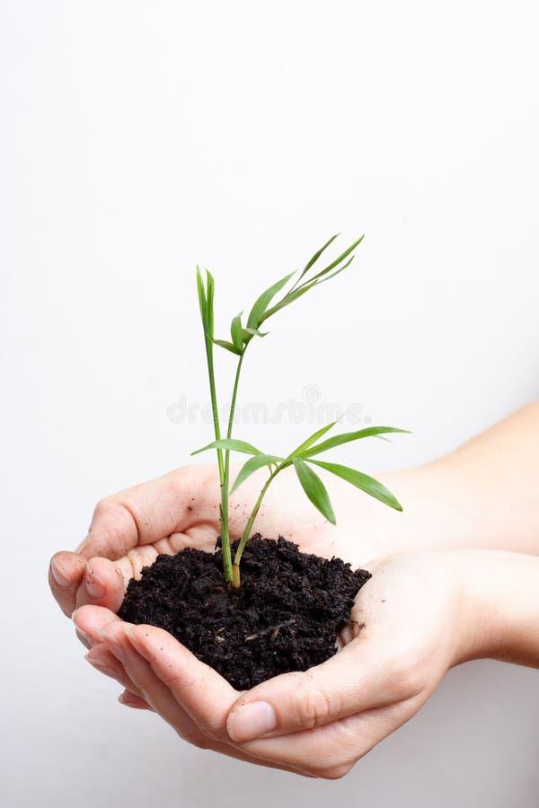 utrzymać rośliny zdjęcie stock