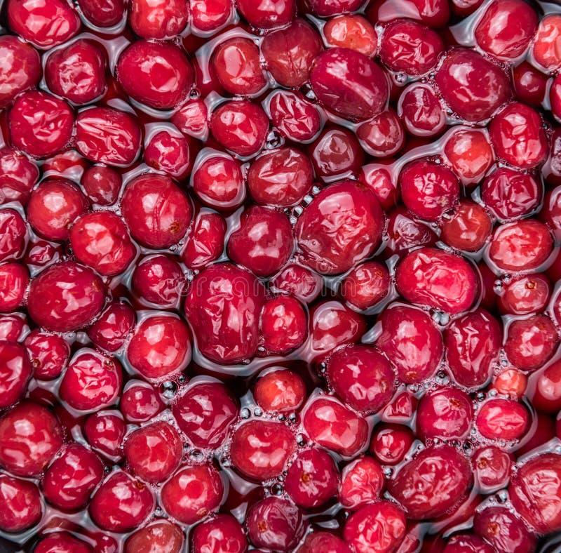 Utrzymanych Cranberries selekcyjna ostrość; szczegółowy zakończenie strzał obrazy royalty free