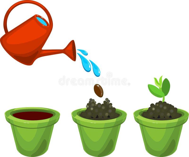 Utseende av den gröna grodden i en blomkruka, når att ha planterat och att ha bevattnat kärna ur royaltyfri illustrationer