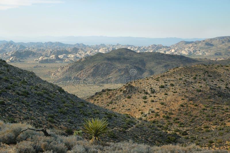 Utsikt för Mojaveöken från Ryan Mountain arkivfoto