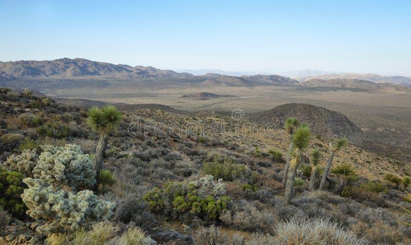 Utsikt för Mojaveöken från Ryan Mountain fotografering för bildbyråer