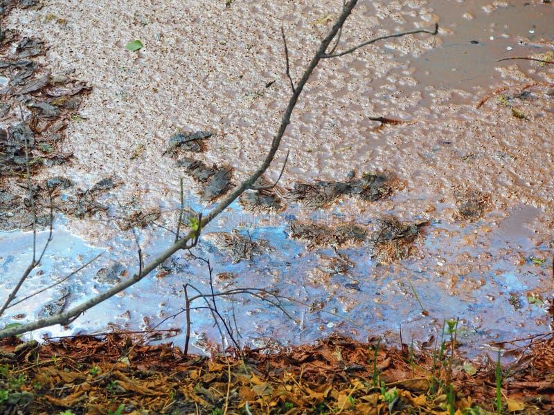 Utsläpp av rått avloppsvatten in i den lilla sjön ekologisk katastrof royaltyfria foton