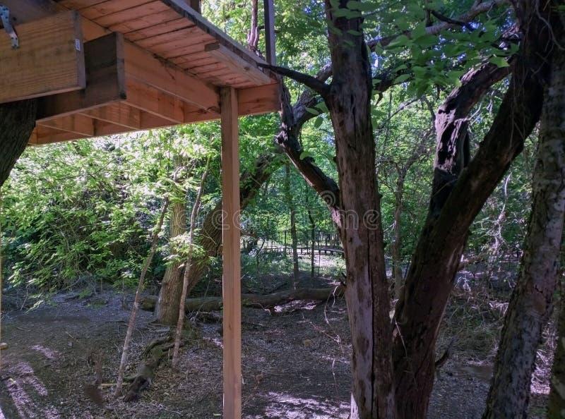 Utslagsplatshus i skog royaltyfria bilder