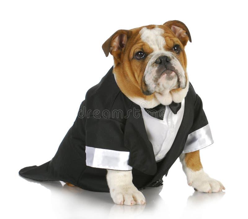 Utsmyckad hund royaltyfria foton