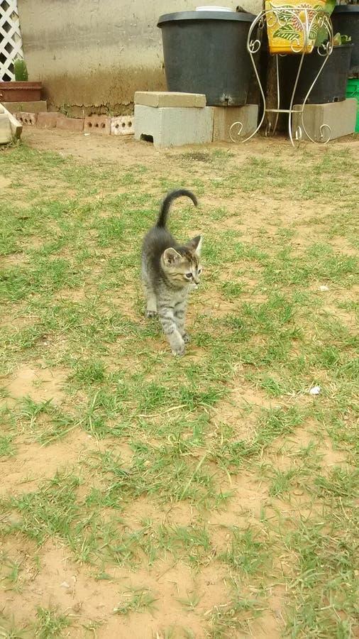 Utsmyckad katt arkivbild