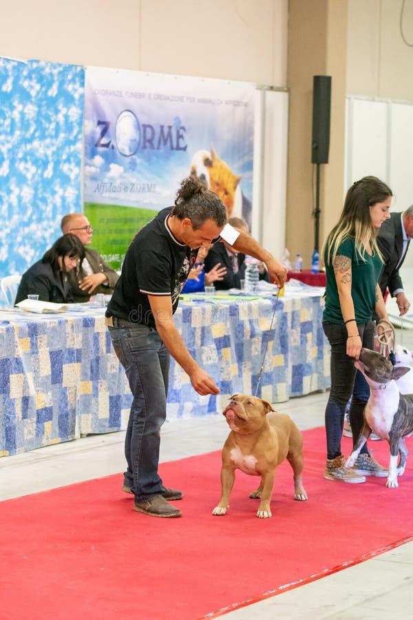Utställning av rashundar på Palasettembre, Chiuduno BG 14-1 royaltyfria foton