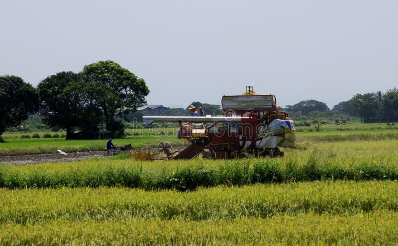 Uttaradit, Thailand, 18,2018 Mei: Het landbouwvoertuig oogst rijst op het padieveld bij Uttaradit-provincie stock fotografie