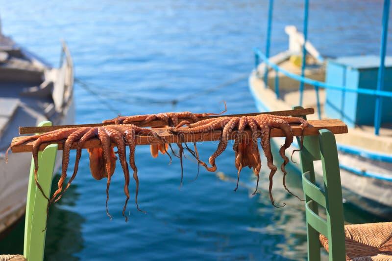 Uttorkningbläckfisk på Kreta, Grekland arkivbilder