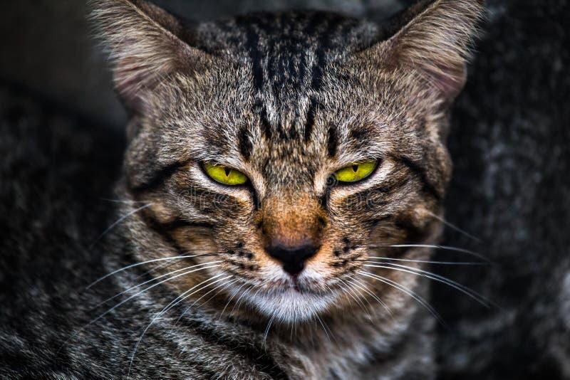 Uttråkad framsida av en katt arkivbild