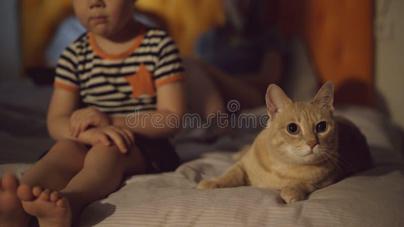Uttråkad pys som siiting på säng med katten medan hans föräldrar som surfar bärbar datordatoren, innan att sova arkivbild