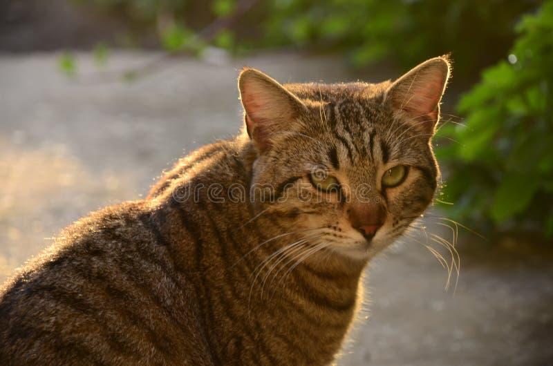 Uttråkad utomhus- katt arkivbilder