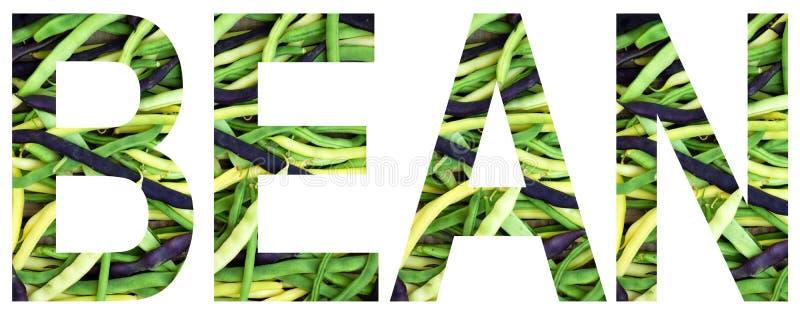 Uttrycka bönan som ut läggas till från färgglade mång--färgade bönor sund begreppsmat Vegetarisk produkt Organisk rå jordbrukspro royaltyfri bild