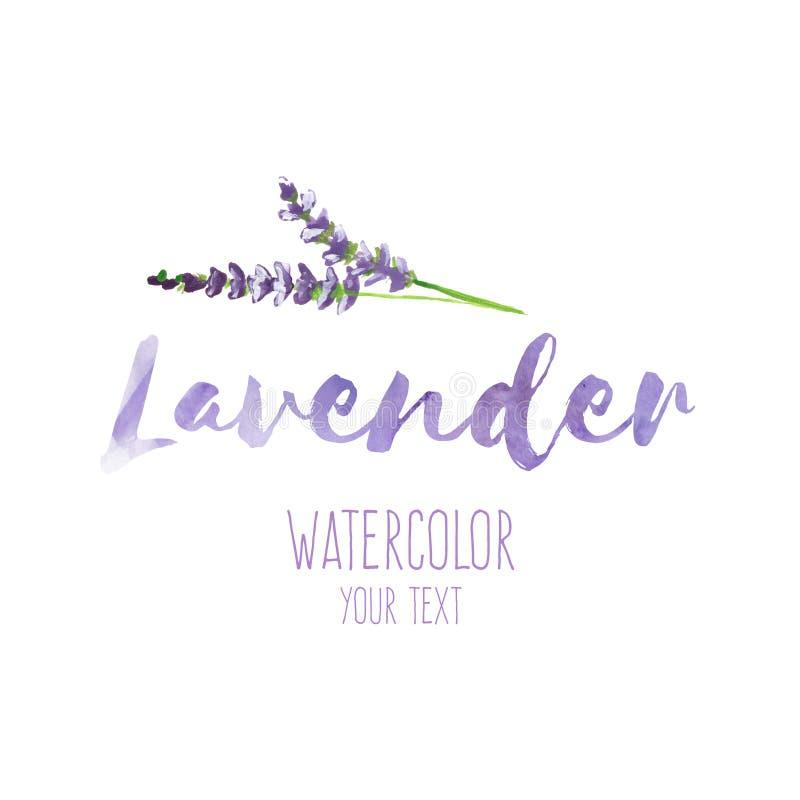 Uttrycka lavendel och handen målade lavendelfilialen, illustration vektor illustrationer